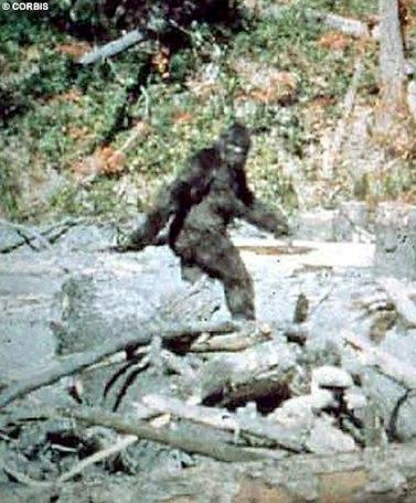 bigfoot-sightings