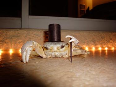 classy-crab